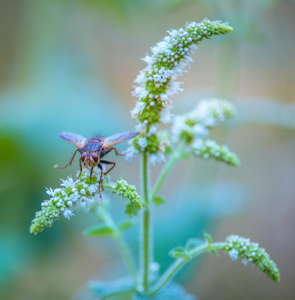 2155, 2155, insecte seul mouche posée sur une plante blanche et verte en été en gros plan sur fonds gris, iStock-1010231096.jpg, 556074, https://essentialys.com/wp-content/uploads/2021/02/iStock-1010231096.jpg, https://essentialys.com/biocontrole/insecte-seul-mouche-posee-sur-une-plante-blanche-et-verte-en-ete-en-gros-plan-sur-fonds-gris/, , 6, , mouche vue de face en pleine action et ce fonds gris neutre qui met en valeur l'insecte, insecte-seul-mouche-posee-sur-une-plante-blanche-et-verte-en-ete-en-gros-plan-sur-fonds-gris, inherit, 1659, 2021-02-25 10:47:42, 2021-02-25 10:47:42, 0, image/jpeg, image, jpeg, https://essentialys.com/wp-includes/images/media/default.png, 1015, 1033, Array